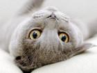 Корма для пожилых кошек