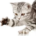 Корма для котят