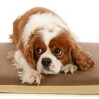 Корма для пожилых собак