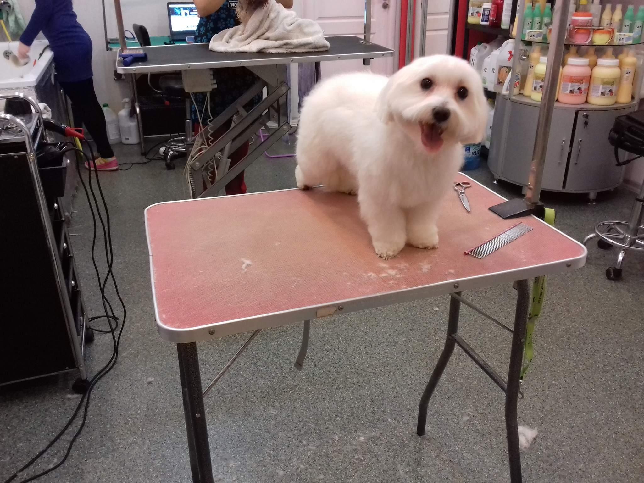 Royal Canin STERILISED Appetite Control +7 0. 4kg   Zoomaailm